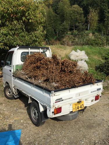 黒豆の収穫をしました【動画】tags[奈良県]